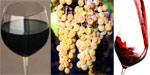 Vino tipico igt Montecastelli