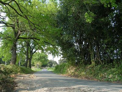 Strada alberata verso la Rocca