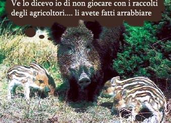 Il piano venatorio politico per risolvere lemergenza in Toscana dei cinghiali