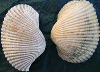Fossili ritrovati in Toscana