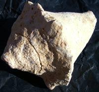 Fossili Montecastelli